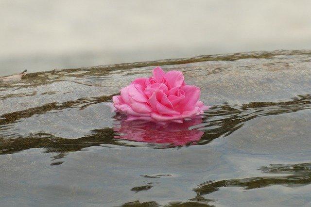 Flor de loto sobre agua